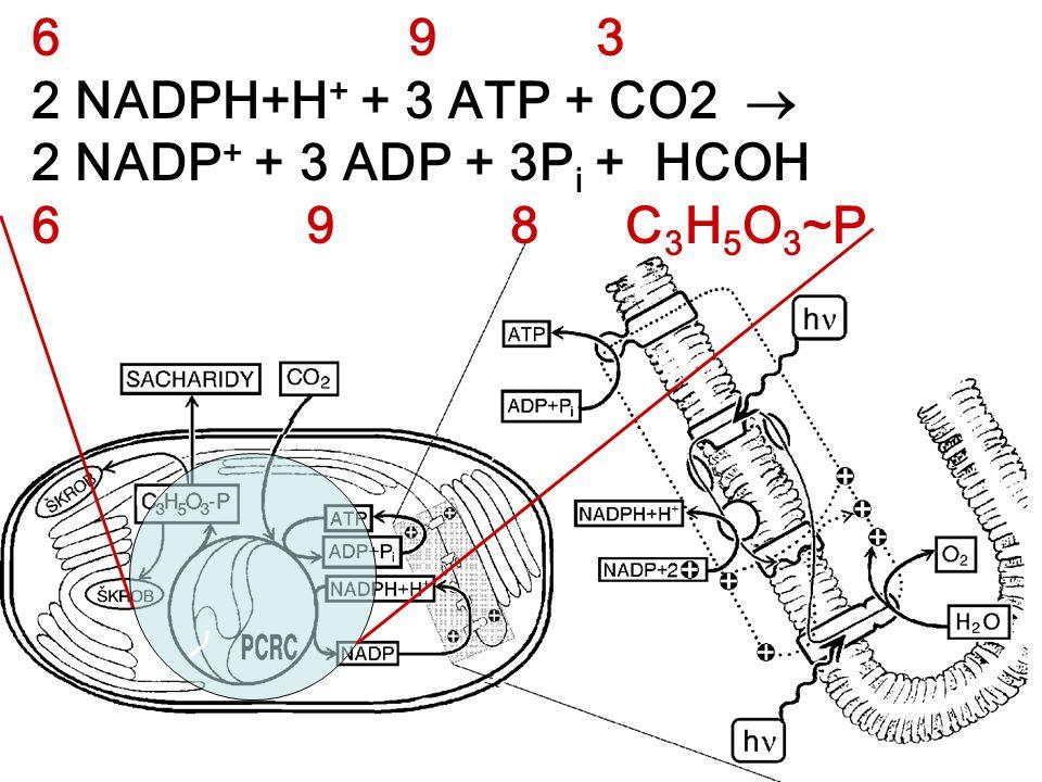 2 NADPH+H+ + 3 ATP + CO2  2 NADP+ + 3 ADP + 3Pi + HCOH 6 9 8 C3H5O3~P