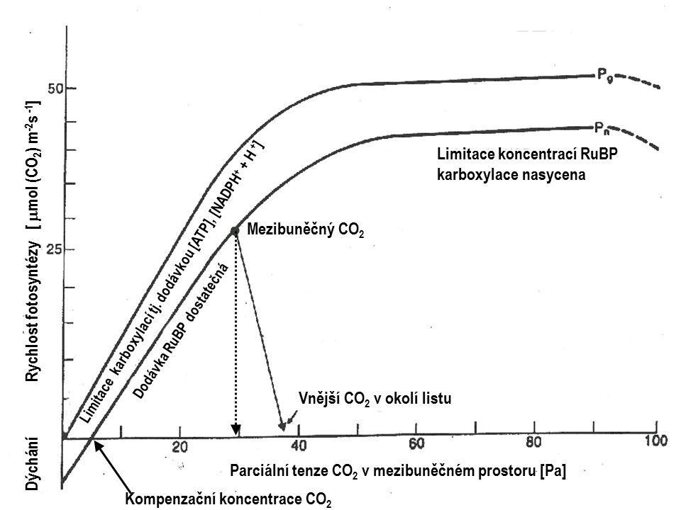 Limitace koncentrací RuBP karboxylace nasycena