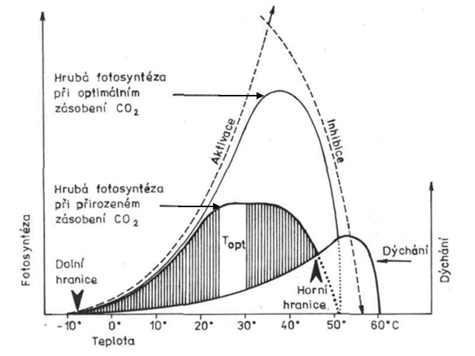 Obr. 3.34. Schematické znázorněni teplotní závislosti fotosyntézy a dýchání.