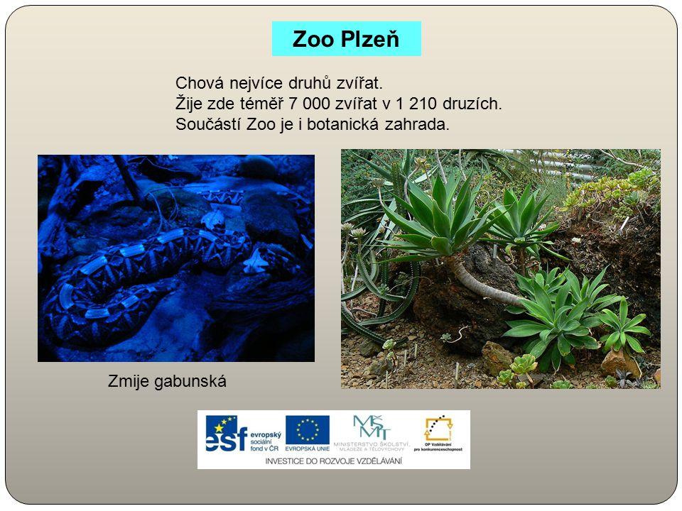 Zoo Plzeň Chová nejvíce druhů zvířat.