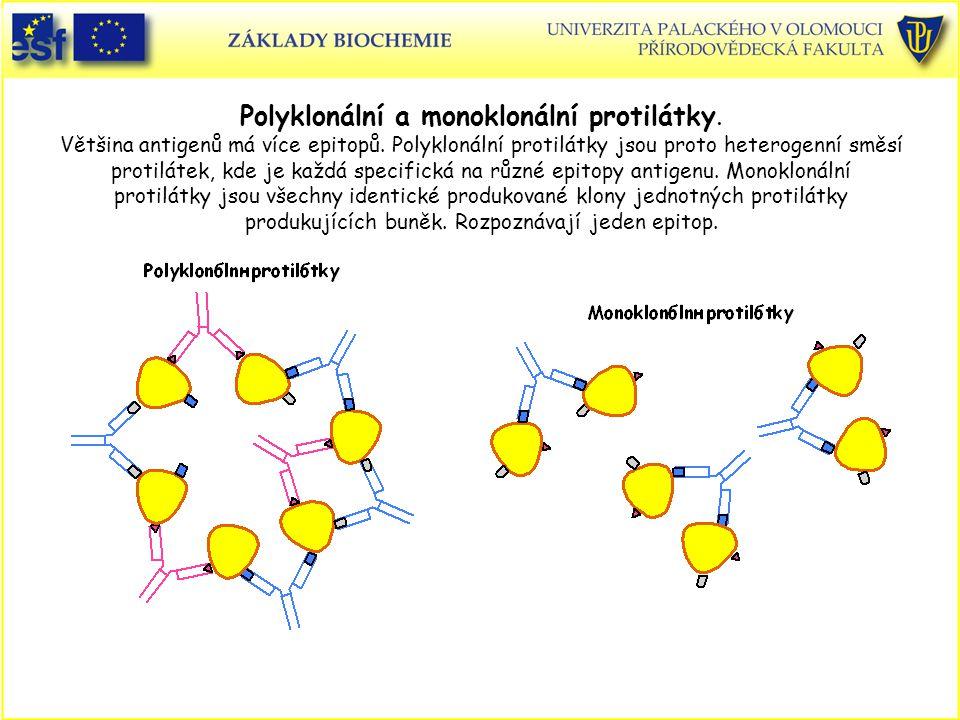 Polyklonální a monoklonální protilátky