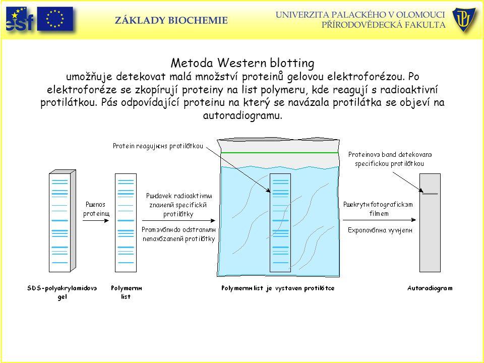Metoda Western blotting umožňuje detekovat malá množství proteinů gelovou elektroforézou. Po elektroforéze se zkopírují proteiny na list polymeru, kde reagují s radioaktivní protilátkou. Pás odpovídající proteinu na který se navázala protilátka se objeví na autoradiogramu.