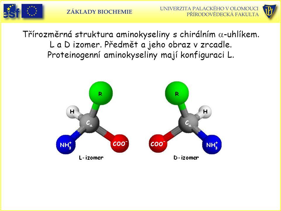 Třírozměrná struktura aminokyseliny s chirálním a-uhlíkem. L a D izomer. Předmět a jeho obraz v zrcadle. Proteinogenní aminokyseliny mají konfiguraci L.