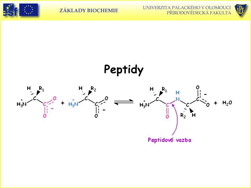 Peptidy Peptidy Peptidová vazba