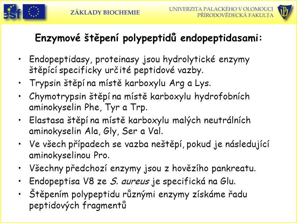Enzymové štěpení polypeptidů endopeptidasami: