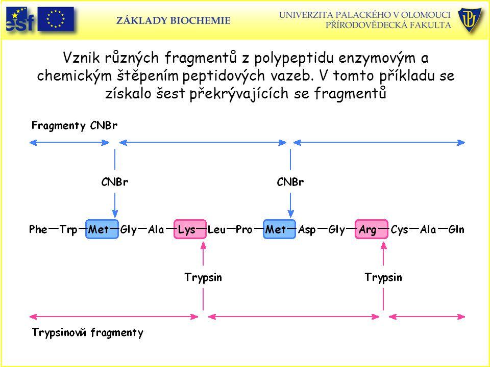 Vznik různých fragmentů z polypeptidu enzymovým a chemickým štěpením peptidových vazeb. V tomto příkladu se získalo šest překrývajících se fragmentů