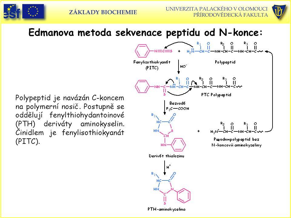 Edmanova metoda sekvenace peptidu od N-konce: