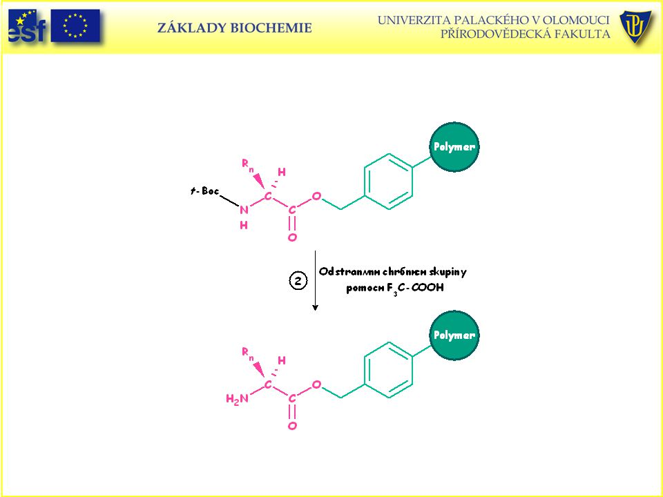 Peptidy, Merrifieldova metoda syntézy peptidů v pevné fázi (2. část)
