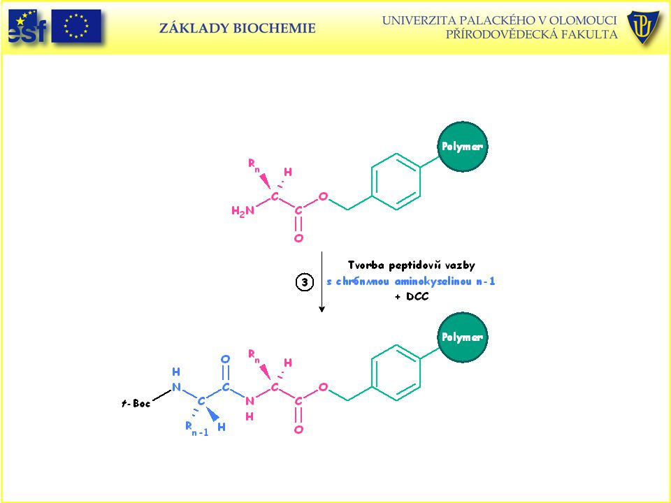 Peptidy, Merrifieldova metoda syntézy peptidů v pevné fázi (3. část)