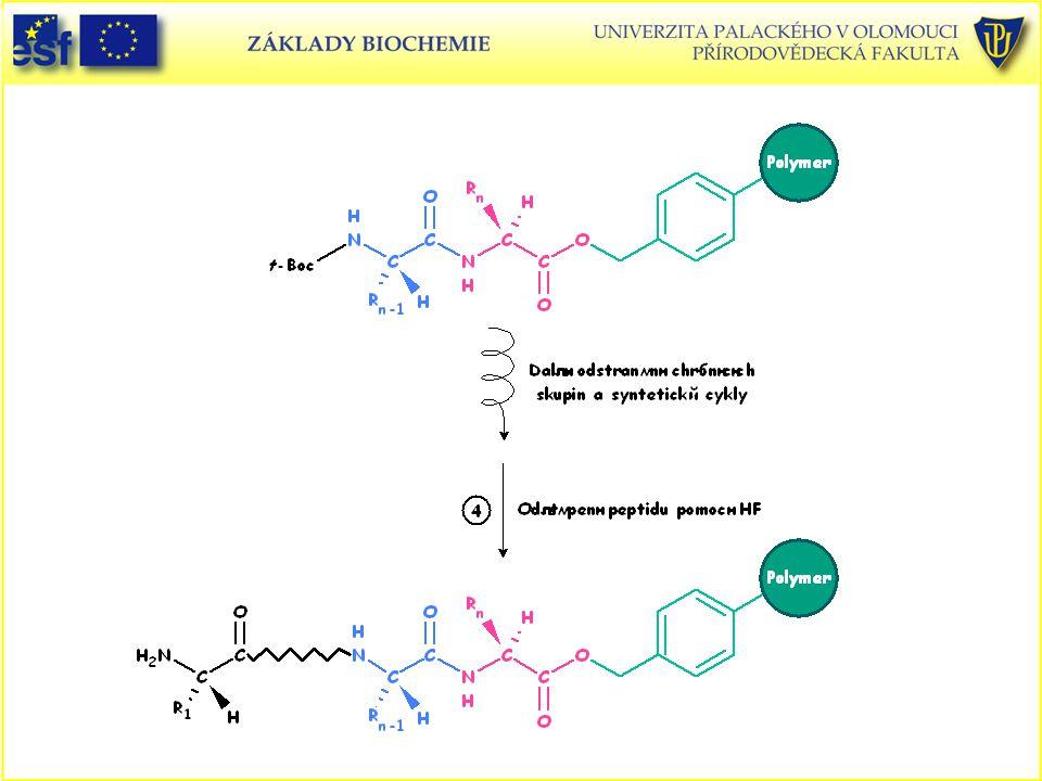 Peptidy, Merrifieldova metoda syntézy peptidů v pevné fázi (4. část)