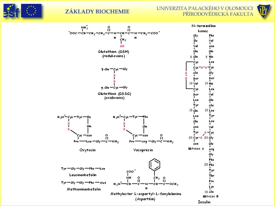 Peptidy přírodní Glutathion. Insulin. Oxytocin. Vasopresin. Leucinenkefalin. Methioninenkefalin.