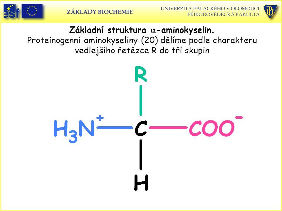 Základní struktura a-aminokyselin