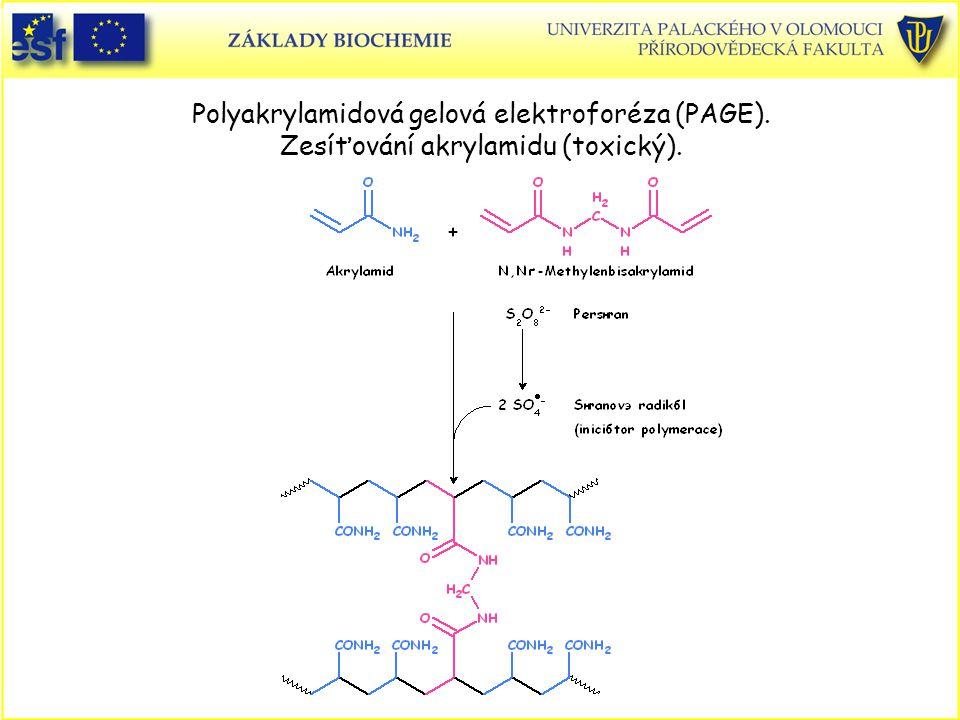 Polyakrylamidová gelová elektroforéza (PAGE)