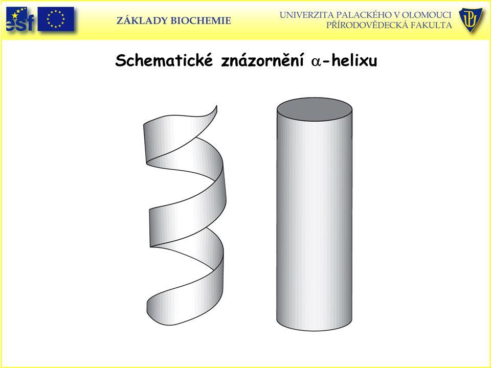 Schematické znázornění a-helixu