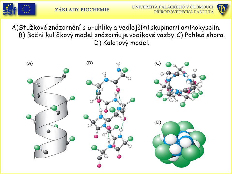A)Stužkové znázornění s a-uhlíky a vedlejšími skupinami aminokyselin