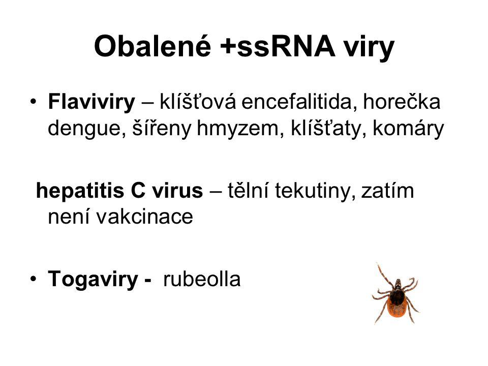 Obalené +ssRNA viry Flaviviry – klíšťová encefalitida, horečka dengue, šířeny hmyzem, klíšťaty, komáry.