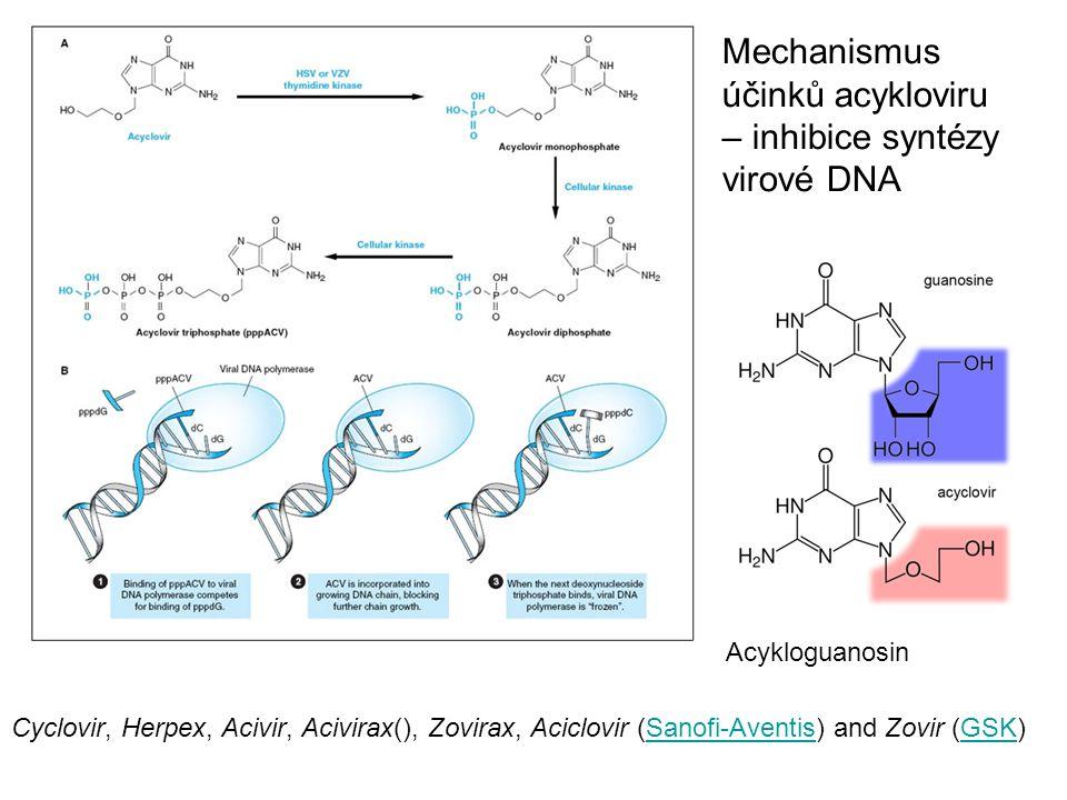 Mechanismus účinků acykloviru – inhibice syntézy virové DNA