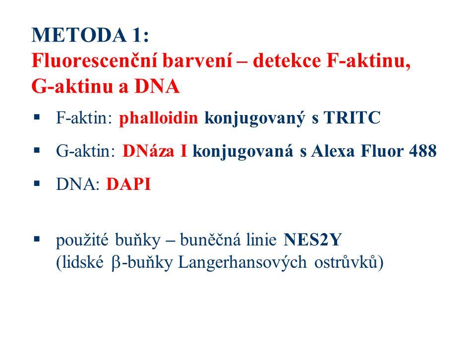 METODA 1: Fluorescenční barvení – detekce F-aktinu, G-aktinu a DNA