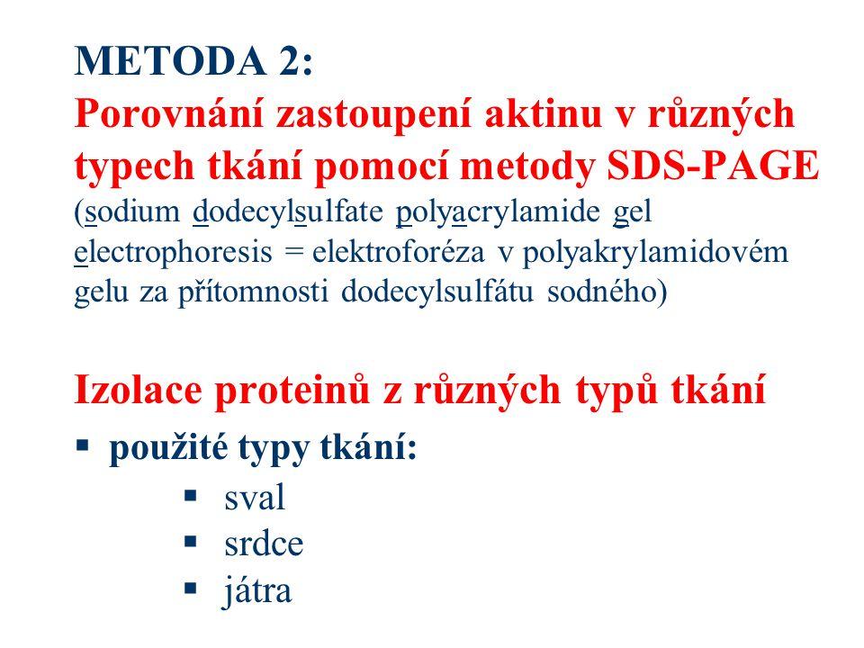 METODA 2: Porovnání zastoupení aktinu v různých typech tkání pomocí metody SDS-PAGE (sodium dodecylsulfate polyacrylamide gel electrophoresis = elektroforéza v polyakrylamidovém gelu za přítomnosti dodecylsulfátu sodného) Izolace proteinů z různých typů tkání