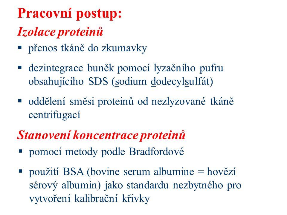 Pracovní postup: Izolace proteinů Stanovení koncentrace proteinů