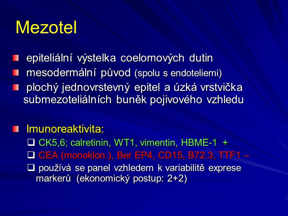 Mezotel epiteliální výstelka coelomových dutin