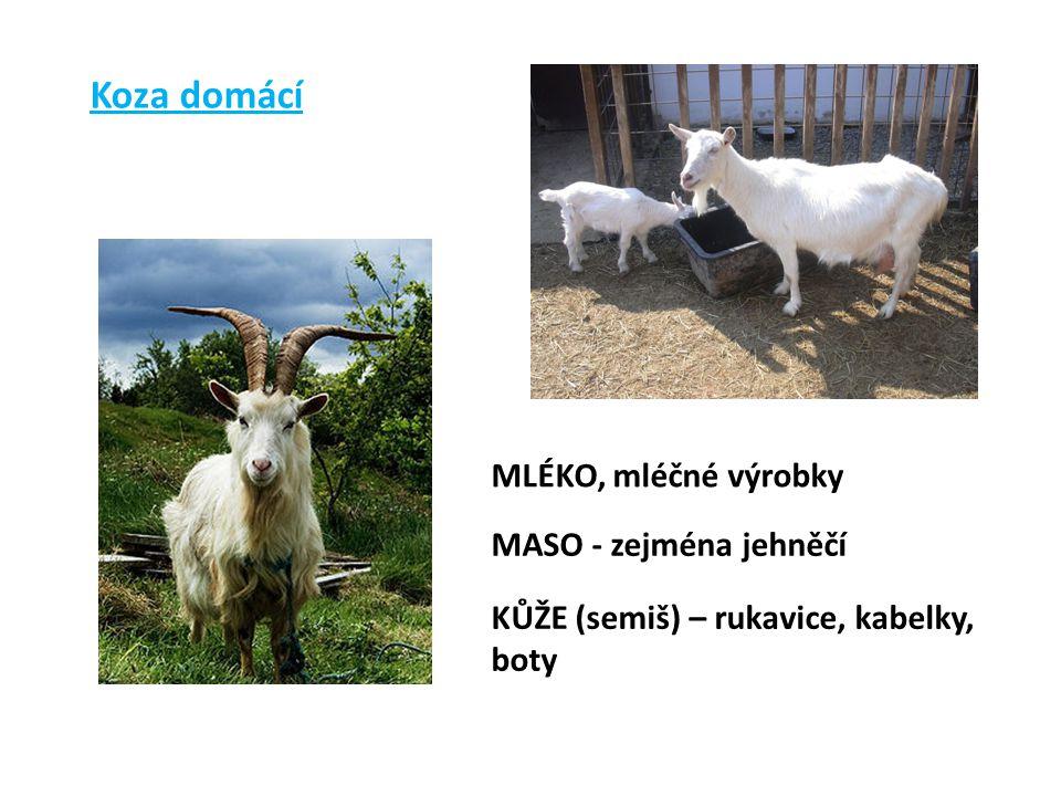 Koza domácí MLÉKO, mléčné výrobky MASO - zejména jehněčí