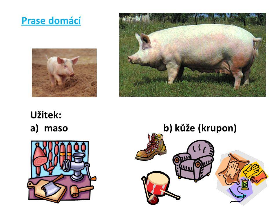 Prase domácí Užitek: maso b) kůže (krupon)