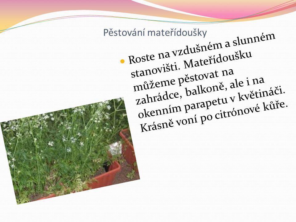 Pěstování mateřídoušky