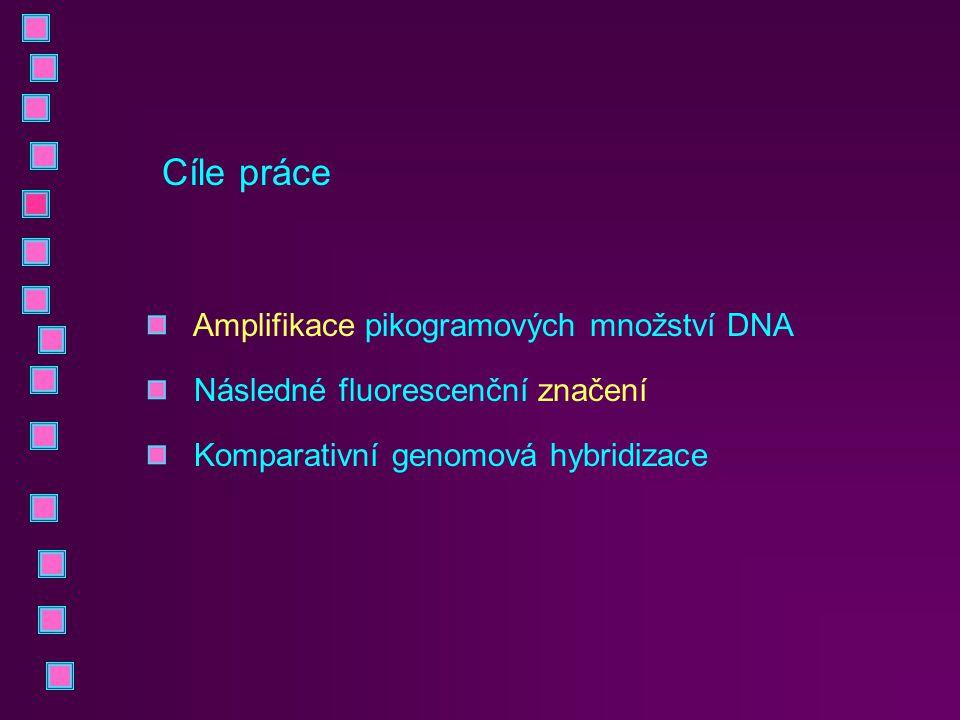Cíle práce Amplifikace pikogramových množství DNA