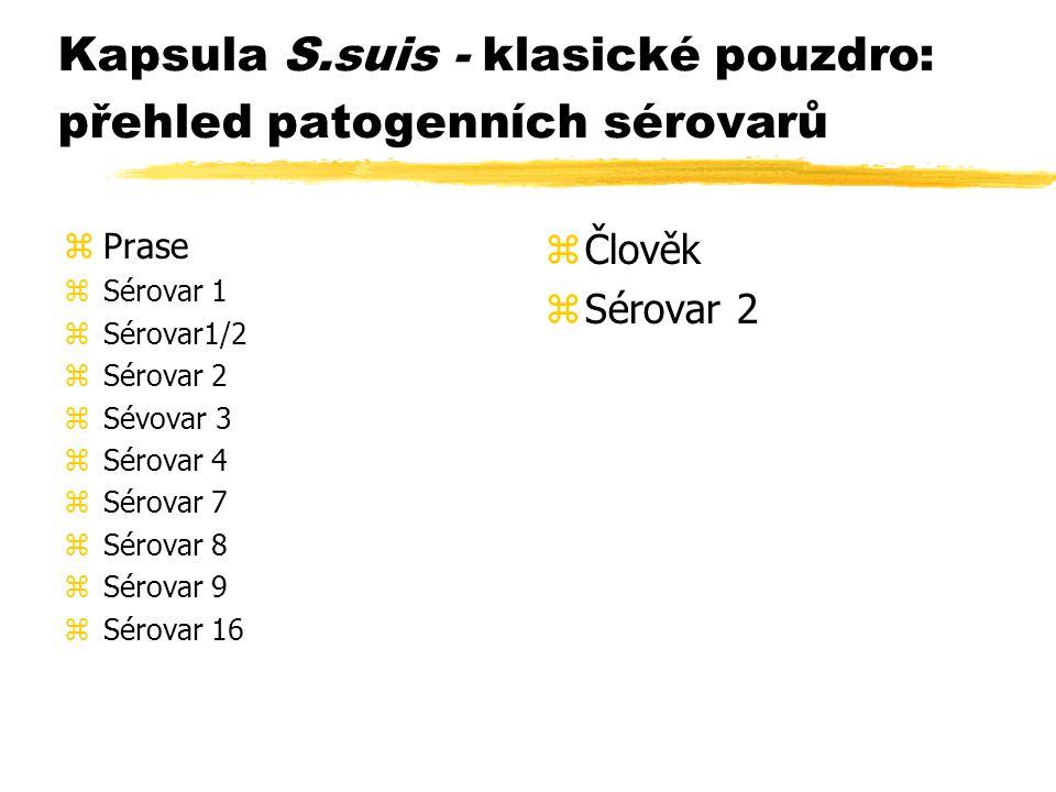 Kapsula S.suis - klasické pouzdro: přehled patogenních sérovarů