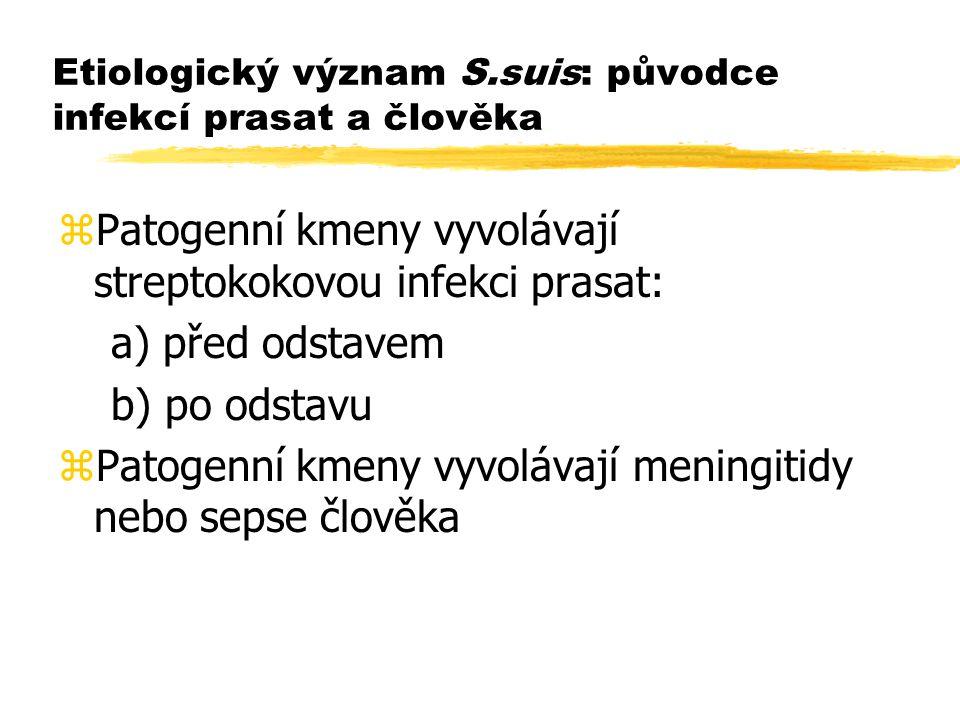 Etiologický význam S.suis: původce infekcí prasat a člověka
