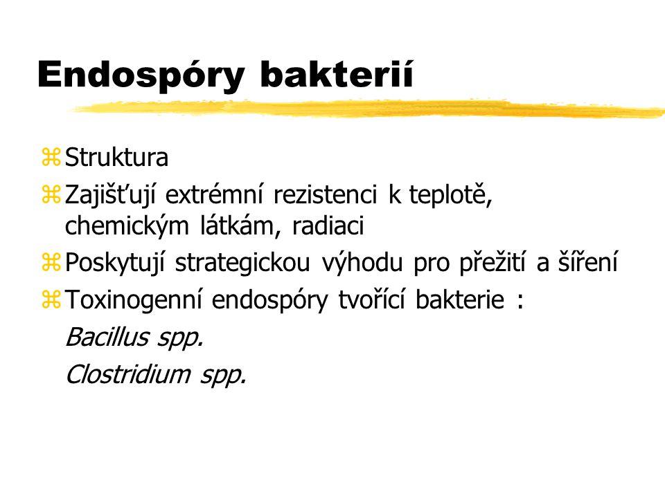 Endospóry bakterií Struktura