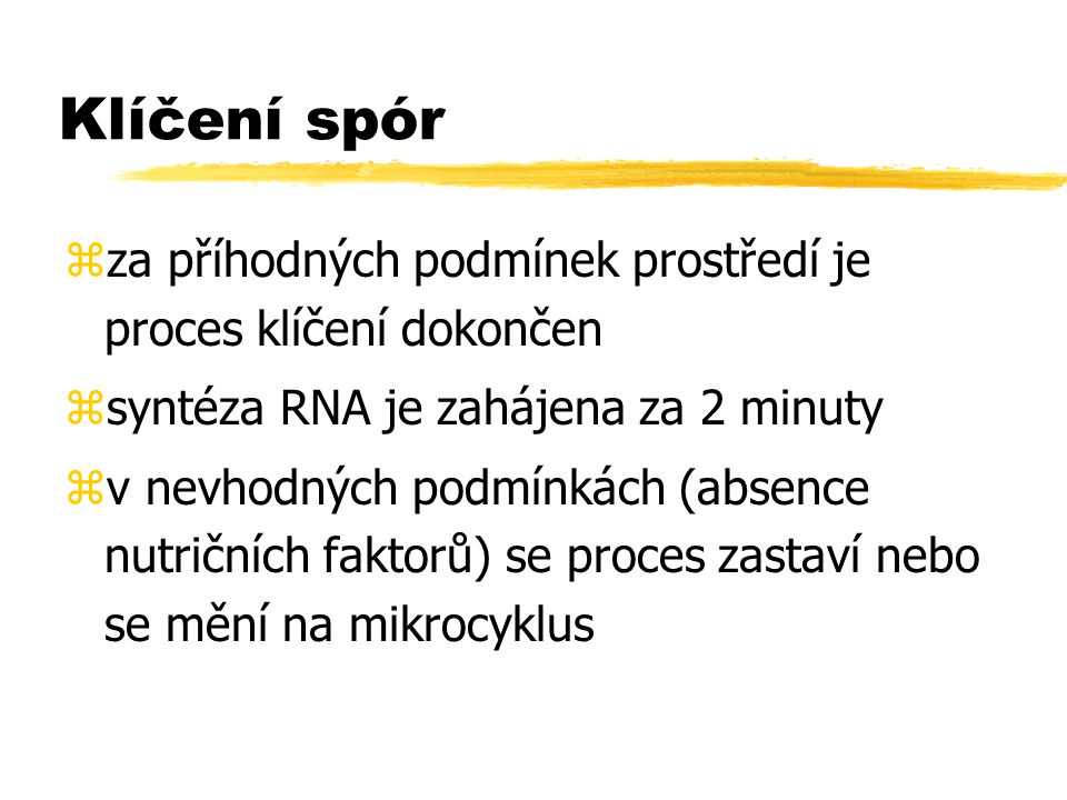 Klíčení spór za příhodných podmínek prostředí je proces klíčení dokončen. syntéza RNA je zahájena za 2 minuty.
