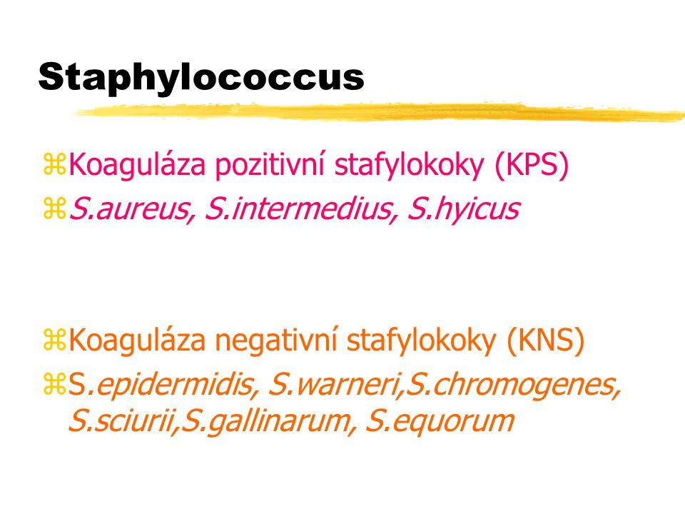 Staphylococcus Koaguláza pozitivní stafylokoky (KPS)