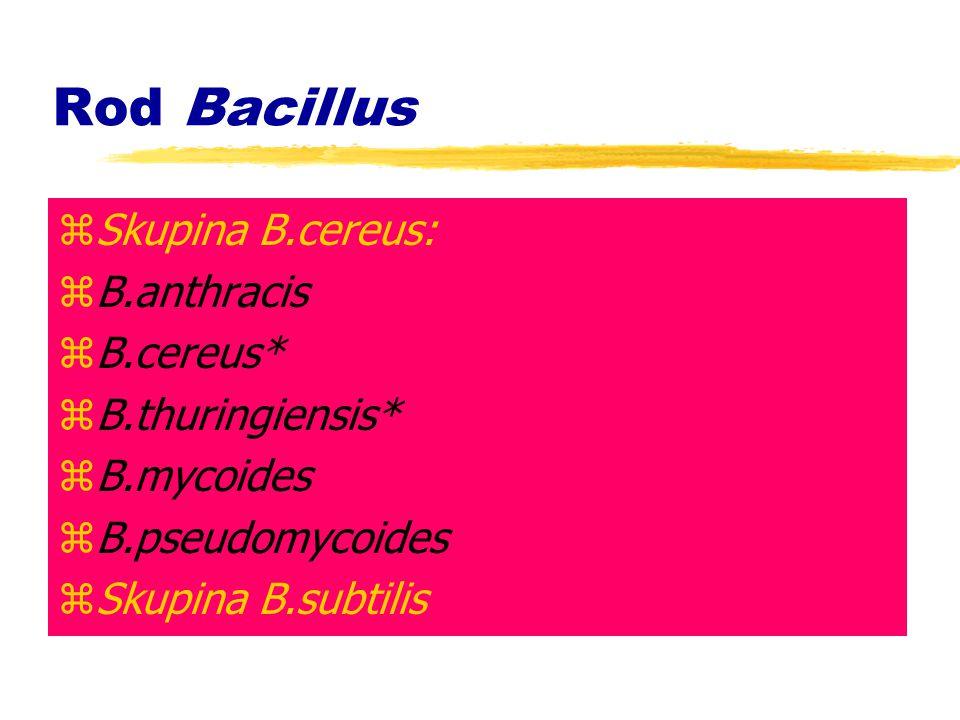 Rod Bacillus Skupina B.cereus: B.anthracis B.cereus* B.thuringiensis*