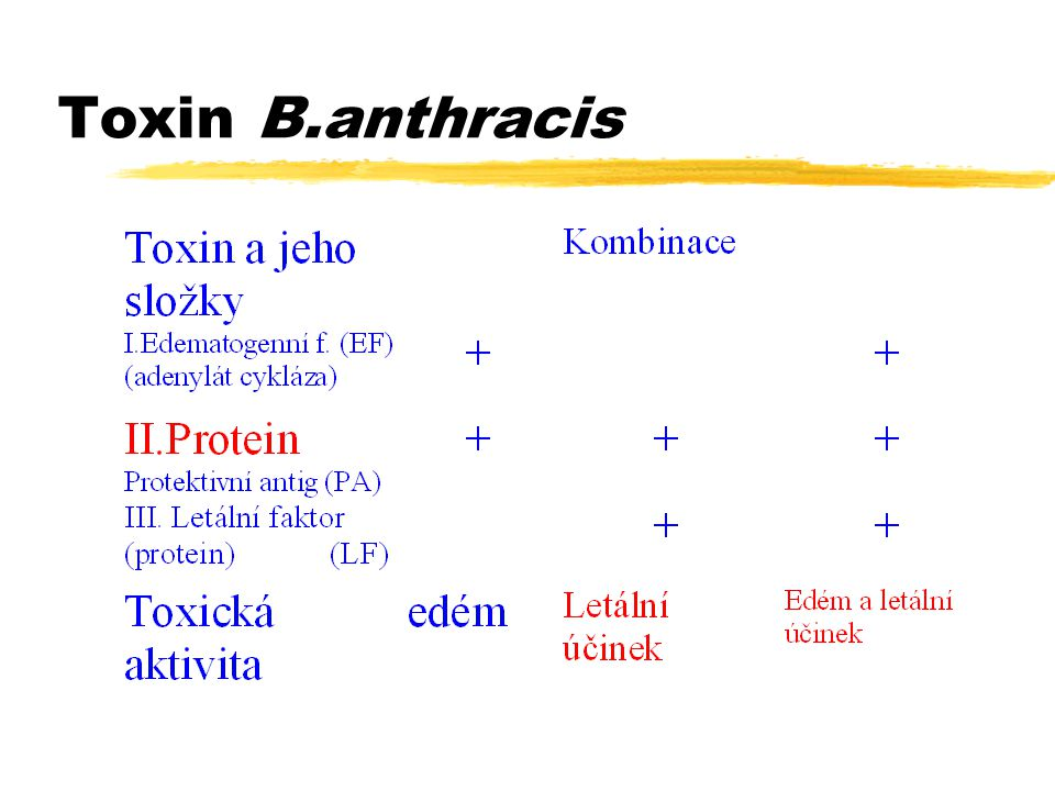 Toxin B.anthracis