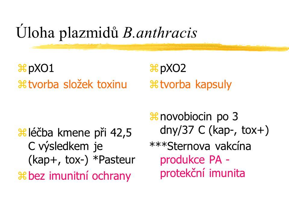 Úloha plazmidů B.anthracis