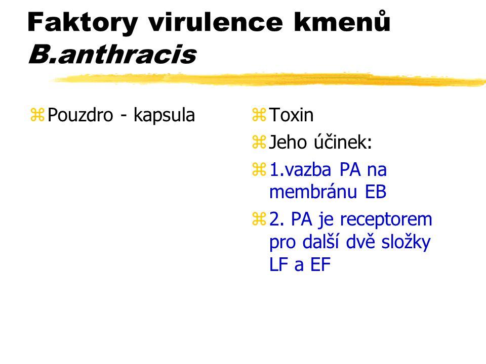 Faktory virulence kmenů B.anthracis