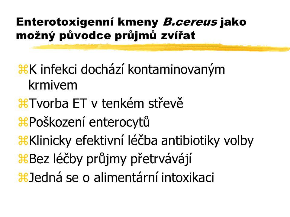 Enterotoxigenní kmeny B.cereus jako možný původce průjmů zvířat