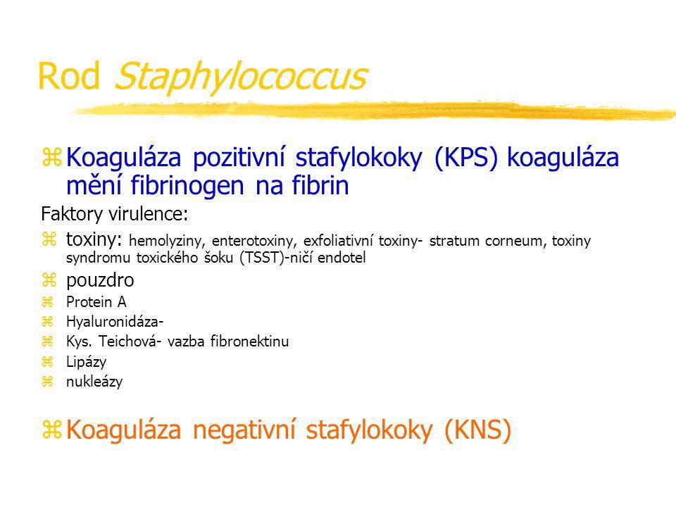 Rod Staphylococcus Koaguláza pozitivní stafylokoky (KPS) koaguláza mění fibrinogen na fibrin. Faktory virulence: