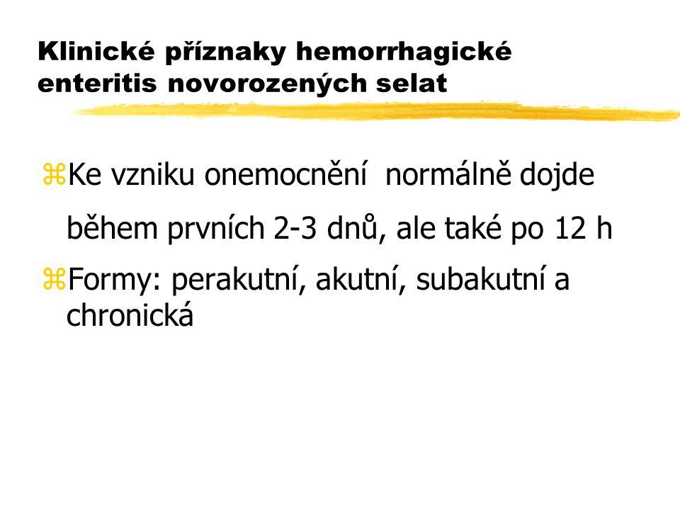 Klinické příznaky hemorrhagické enteritis novorozených selat