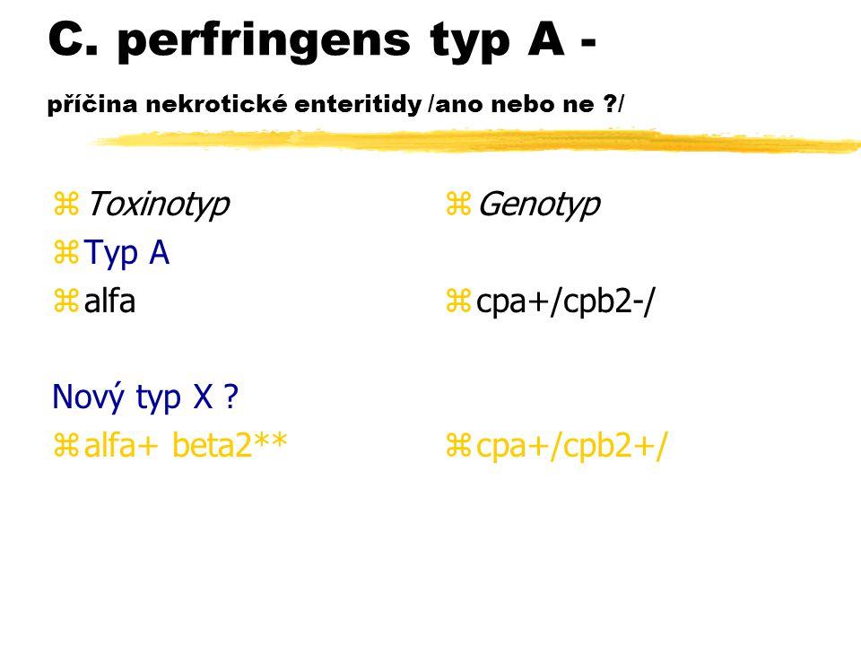 C. perfringens typ A - příčina nekrotické enteritidy /ano nebo ne /