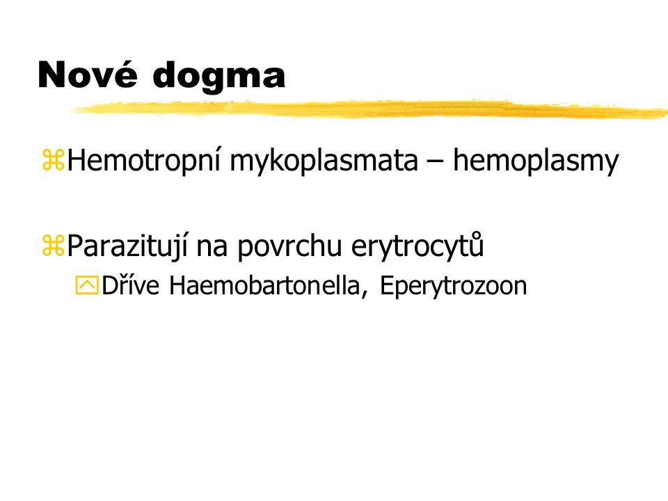 Nové dogma Hemotropní mykoplasmata – hemoplasmy