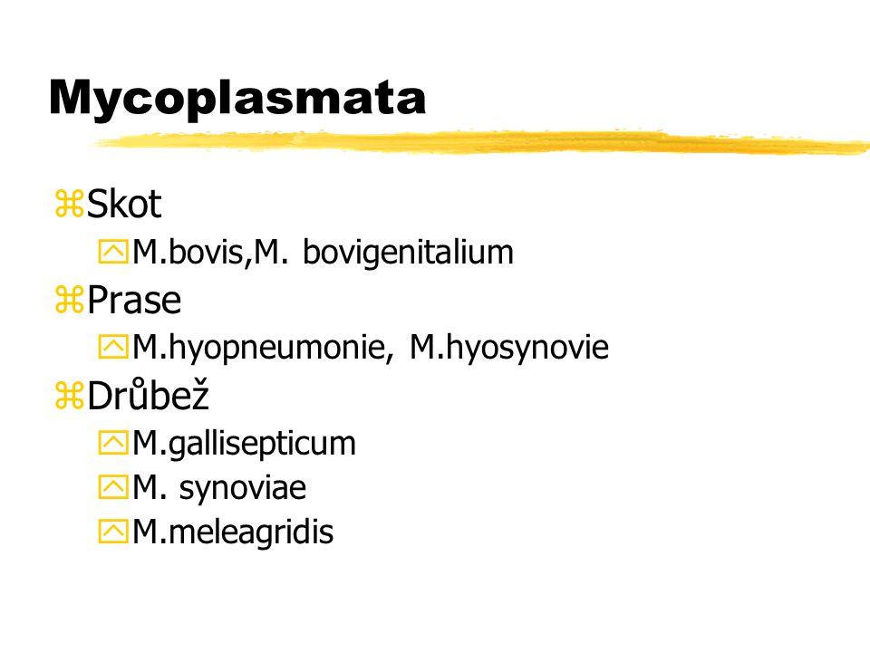 Mycoplasmata Skot Prase Drůbež M.bovis,M. bovigenitalium