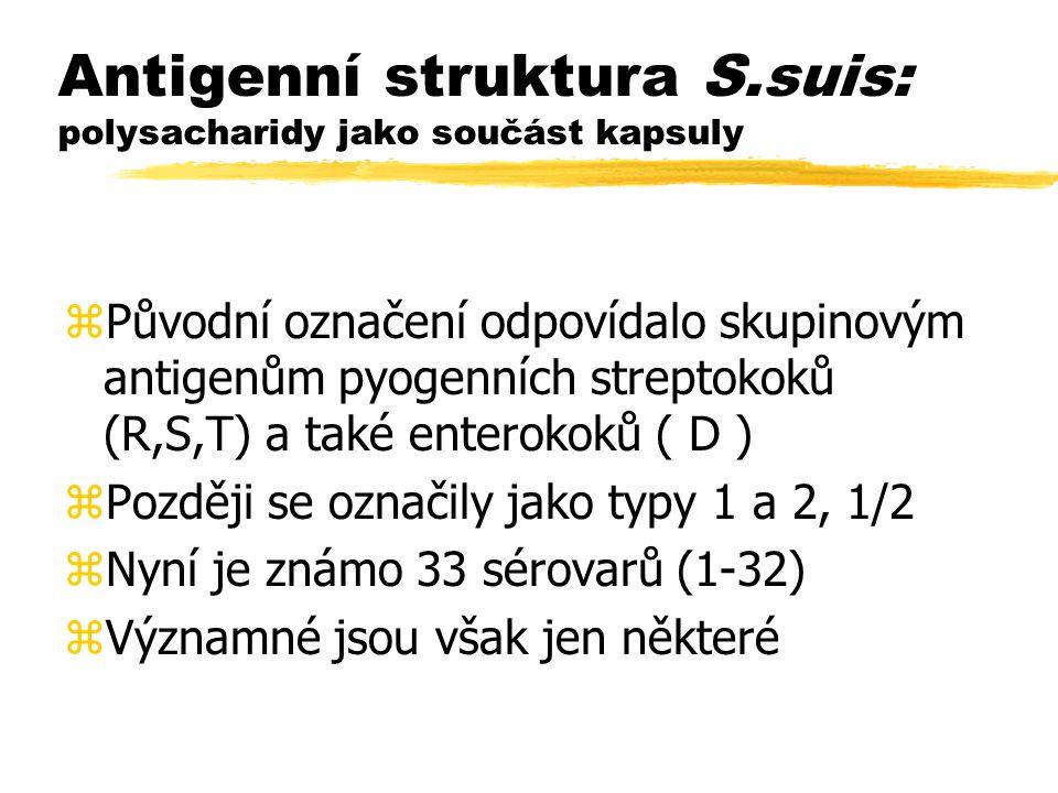 Antigenní struktura S.suis: polysacharidy jako součást kapsuly