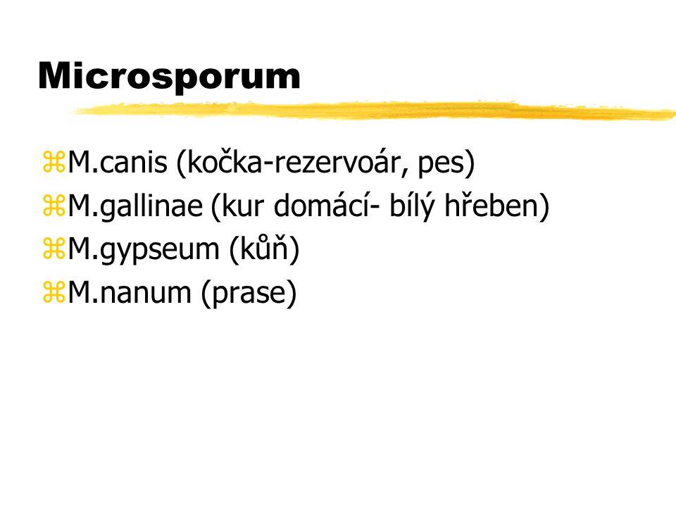 Microsporum M.canis (kočka-rezervoár, pes)