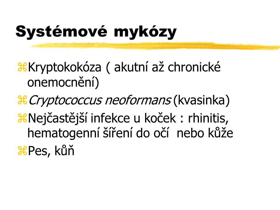 Systémové mykózy Kryptokokóza ( akutní až chronické onemocnění)