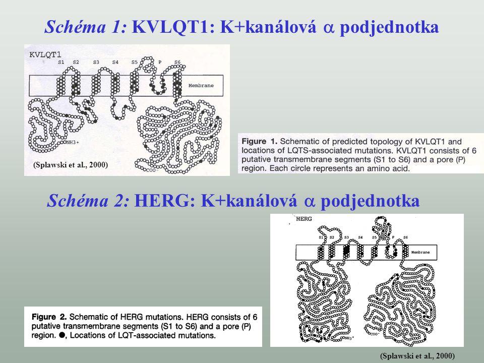 Schéma 1: KVLQT1: K+kanálová  podjednotka