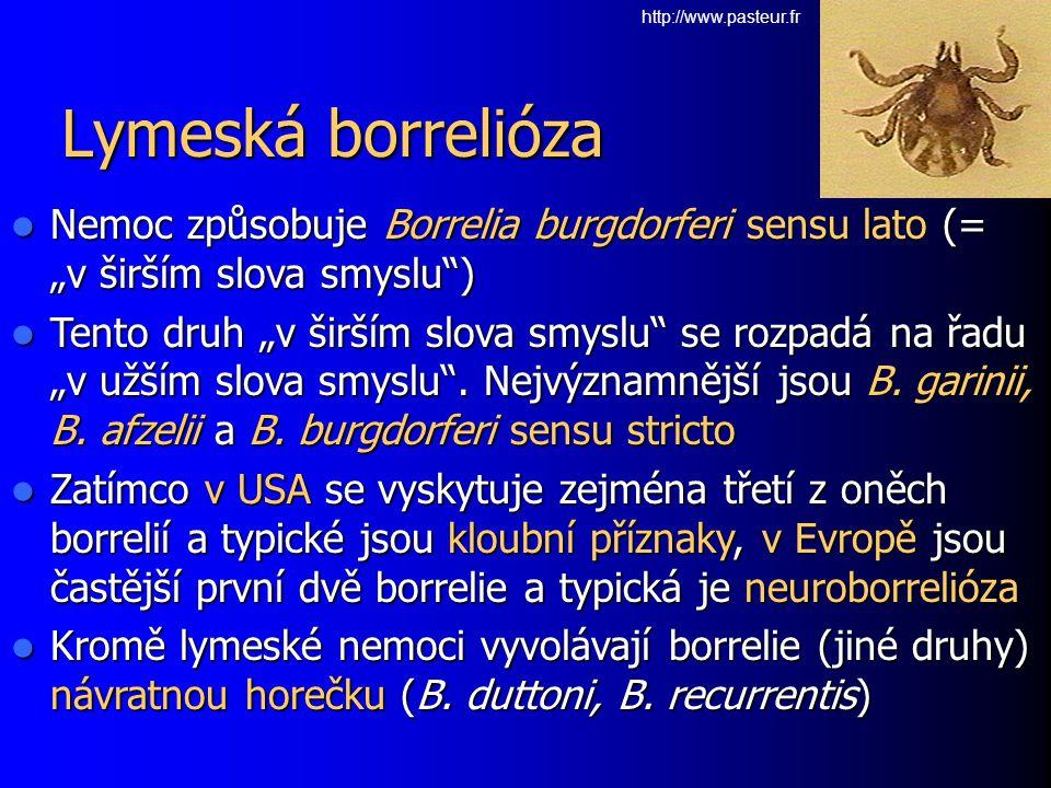 """http://www.pasteur.fr Lymeská borrelióza. Nemoc způsobuje Borrelia burgdorferi sensu lato (= """"v širším slova smyslu )"""