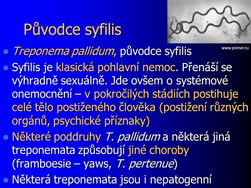Původce syfilis Treponema pallidum, původce syfilis
